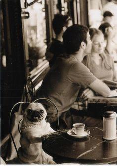 Pug in Paris - this cracks me up!