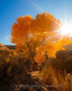 Jerry Cowart Fine Art Photography is having a huge Holiday Sale. Beautiful fine photography and frame-able Fine Art Greeting Cards. 20% OFF. 20% off Use Coupon code CAMP20   Happy Thanksgiving and have a wonderful Holidays,  Jerry.  Autumn Golden Sun Shinning On Birch Tree Fine Art Photograph Print  Autumn Golden Sun Shinning On Birch Tree by PhotosbyJerryCowart