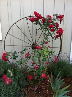 WHAT A GREAT IDEA FOR OUR WAGON WHEELS. Wagon Wheel as Trellis
