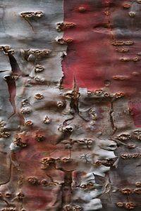 Textile Texture, Texture Art, Wood Texture, Natural Form Art, Natural Texture, Nature Artwork, Nature Photos, Patterns In Nature, Textures Patterns