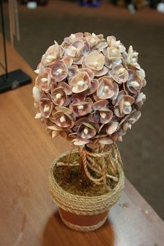 made of shells