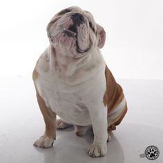Be happy for this moment. This moment is your life. #brooklyn #brooklynmood #dogs #pets #bully #bulldogs #englishbulldogs #cute #loveable #wallpaper #ecards #cards #greetings #quotes