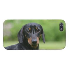 Black and Tan Miniture Dachshund 1 Cover For iPhone SE/5/5s   picasso dachshund tattoo, double dapple dachshund, dachshund puppy long haired #dachshundsoftheworld #dachshundsofbrazil #DachshundSmile Dapple Dachshund Puppy, Dachshund Puppies For Sale, Baby Dachshund, Dachshund Shirt, Wire Haired Dachshund, Dachshund Gifts, Funny Dachshund, Dachshund Costume, Chihuahua Dogs