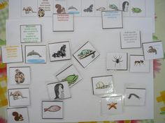 Zoology 1. . . Lesson 1. . . Animal classification. . . chart, printouts, cards