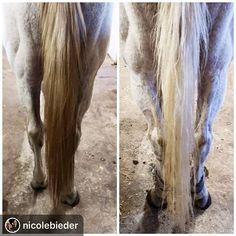 k9 nanospray häst
