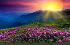 God's Glory scripture eCard scripture Psalm 57:8 KJV Psalm 57:8 Psalm 8:1 1 Chronicles 16:24 Psalm 108:5 Isaiah 40: 5 Psalm 57:5