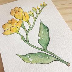 Shop affordable wall art to transform your home, dorm or apartment. Discover art prints, framed art prints, posters and more to match your unique decor style. Watercolor Bookmarks, Pen And Watercolor, Watercolor Illustration, Flower Sketches, Art Drawings Sketches, Watercolor Flowers Tutorial, Freesia Flowers, Amazing Drawings, Painting Process