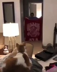 The cat forgot how to cat - Cute/ Tiere - Cute Animal Videos, Funny Animal Pictures, Cute Funny Animals, Cute Baby Animals, Animals And Pets, Cute Cats, Funny Cats, Cat Fun, Crazy Cat Lady