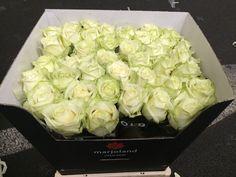 #Rose #Rosa #WhiteNaomi #GrowerMarjoland; Available at www.barendsen.nl