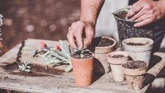 4 razones por las que no crece tu suculenta Cactus Y Suculentas, Cacti And Succulents, Bonsai, Plants, Garden, Propagating Succulents, Watering Plants, Plant, Planets