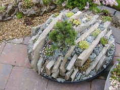 A small crevice garden - YouTube