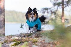 Rukka Raincoats, overalls, fleecewear, and knitwear for dogs Pet Clothes, Doggies, Husky, Corgi, Raincoat, Spring Summer, Pets, Animals, Little Puppies