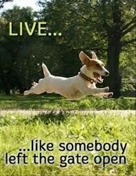 Live like somebody left the gate open!!