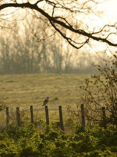 owls-n-elderberries:  Barn Owl by Benjamin Joseph Andrew on Flickr.