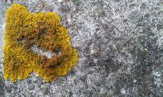 mos/moss in our garden