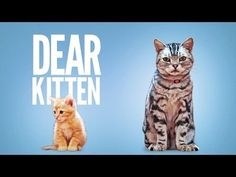 This Friskies commercial shows an older cat introducing a kitten to the household, it's humorous, sweet, and bound to make your day better.