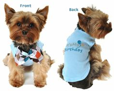 It's My Birthday Dog Shirt..........comes with a bow tie! Available at http://doggyinwonderland.com/item_1821/Its-My-Birthday-Dog-Shirt.htm