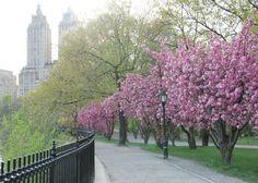 State organizzando la vostra vacanza a New York ad Aprile 2016? Scopri i principali eventi del mese, le cose da fare e da vedere ad aprile.