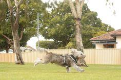 speedy doggo