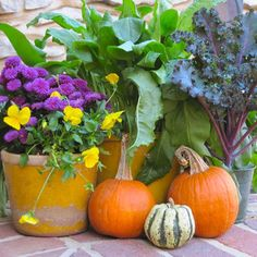 Big plants fill a pot all by themselves, or pair small and medium-size pots of mums, to allow for more than one color. Pie pumpkins nestle nicely among the plants, adding a pop of orange. Bottle Garden, Flower Pots, Lawn And Garden, Garden Crafts, Gardening For Beginners, Big Plants, Outdoor Gardens, Easy Garden, Gardening Tips