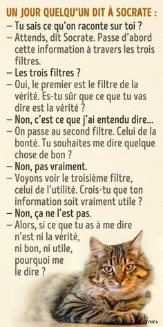 Quotes for Fun QUOTATION – Image : As the quote says – Description Les trois filtres de Socrate Sharing is love, sharing is everything Positive Attitude, Positive Quotes, Love Your Enemies, French Quotes, French Phrases, Spanish Quotes, Psychology Facts, Positive Psychology, Some Words