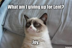 Grumpy Cat Advice - LOLcats is the best place to find and submit funny cat memes and other silly cat materials to share with the world. We find the funny cats that make you LOL so that you don't have to. Missing You Memes, I Miss You Meme, Miss You Funny, Funny School Memes, School Humor, Funny Memes, True Memes, Sf Wallpaper, Wallpaper Collage