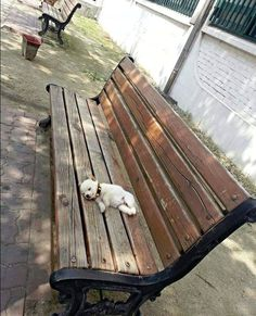 A cute puppy taking a nap on a public bench.