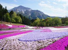 Spots You Must Visit in Saitama Prefecture!