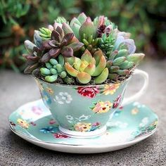 40 Easy DIY Teacup Mini Garden Ideas to Add Bliss to Your Home Fantastische 40 einfache DIY-Teetasse Succulent Gardening, Succulent Terrarium, Container Gardening, Succulent Ideas, Organic Gardening, Urban Gardening, Kitchen Gardening, Gardening Books, Flower Gardening