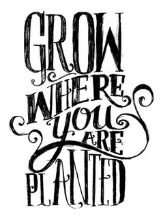 grow where you are planted.