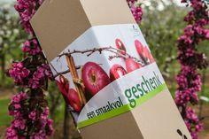 http://www.minitree.nl/geschenkboom/52-eindejaarsboom-