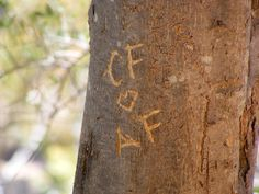 engrave names into a tree after getting married
