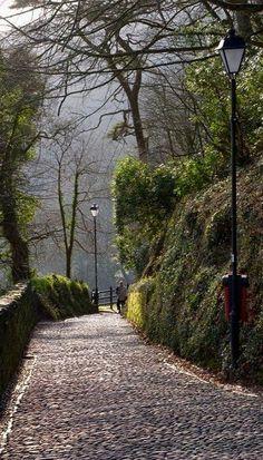 Path Down to Clovelly, Devon, England, UK