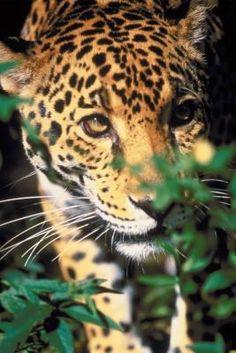 Het leven van veel dieren wordt in gevaar gebracht door het kappen van regenwoud