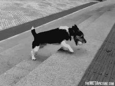 selbst ist der Hund