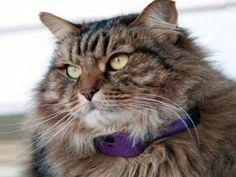 PetPace, le collier connecté pour animaux