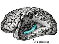 Forskare: Att vara glömsk är ett tecken på att du är ovanligt intelligent