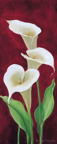 Calla on burgundy III Canvas Art - Gertrud Schweser x Calla Lillies, Calla Lily, Watercolor Flowers, Watercolor Art, Lily Painting, Beautiful Paintings, Painting Inspiration, Flower Art, Beautiful Flowers