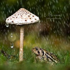 A mushroom Umbrella