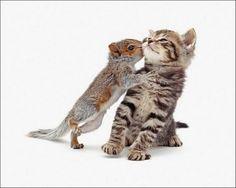 Kitten & Baby Squirrel