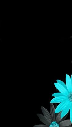 Black and blue flowers teal and black wallpaper, black flowers wallpaper, flowery wallpaper, Flowers Photos Wallpaper, Blue Flower Wallpaper, Black Background Wallpaper, Black Phone Wallpaper, Phone Wallpaper Images, Dark Wallpaper, Cellphone Wallpaper, Photo Wallpaper, Trendy Wallpaper