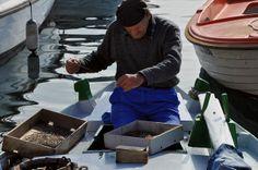 """un vecchio pescatore Rovignese sistema il""""parangal""""o palamito in italiano,una lunga fila di ami che si cala la sera per catturare orate,pagelli e saraghi."""