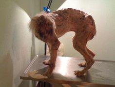 Σκύλος σα «μούμια» εντοπίστηκε και πάλι στον Ασπρόπυργο