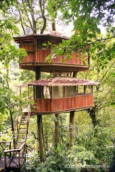 Mis Ojos treehouse at finca bellavista. The first treehouse in our community!
