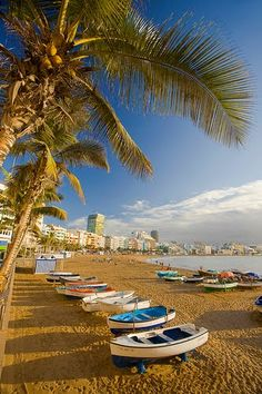 Palm trees, sand and sea in the Canary Islands.