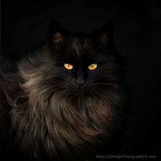 darkface:     by *La-Vita-a-Bella
