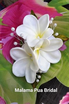 A Hawaiian Tropical Dream Hair Accessory! Now created with Real Touch (Tru Touch) Premium Plumeria. Now available on a beautiful silver metal hair comb! Hand wired Freshwater pearl centers with Pearl spryas or choose Swarovski crystal centers with Rhinestone sprays. Plumeria Flowers, Silk Flowers, Bridal Hair Flowers, Flowers For You, Dream Hair, Silver Hair, Bridal Headpieces, Fascinator, Hair Accessories