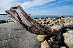 Wood dragon by Magnus Lillieborg