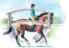 Develop Your Dressage Horse's Topline by Sue Blinks with Beth Baumert, Dressage Today