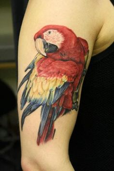 Parrot Tattoo Designs, Designs of Parrot Tattoos, Beautiful Parrot Tattoo, Birds, Gorgeous Tattoos, Great Tattoos, Body Art Tattoos, Bird Tattoos, Tatoos, Awesome Tattoos, Black Bird Tattoo, Black Tattoos, Funny Bird Pictures